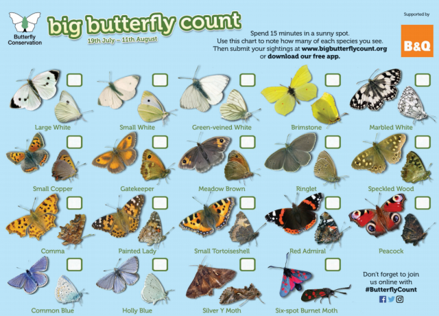 great butterfly count